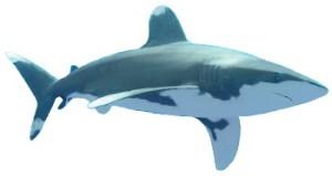 Tuburão