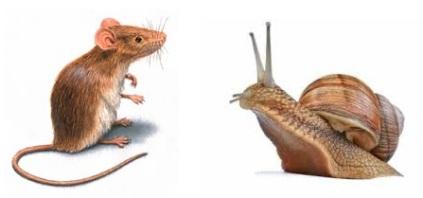 Rato e Caracol